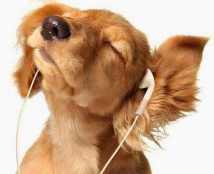 dogmusic