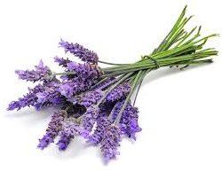 lavanda o altri fiori per aromatizzare la crema